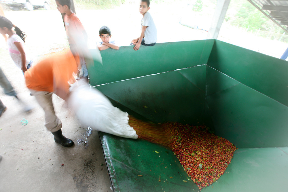 Coffee is poured into chutes to be processed by machinery at the coffee mill. Cooperativa Agropecuaria de Producción Flor del Pino is a Fairtrade-certified producer based in Ocotepeque, Honduras.