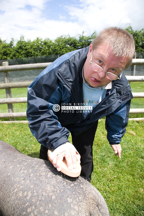Man with learning disabilities on a trip to an animal centre grooming a pig,