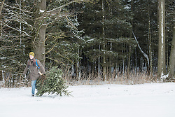 Young man carrying Christmas tree by the edge of forest, Bavaria, Germany