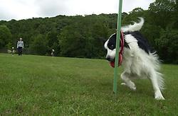 Eddie Sander with his Dogs Jackson and Inka<br /><br />18 June 2004<br /><br />Copyright Paul David Drabble<br /> [#Beginning of Shooting Data Section]<br />Nikon D1 <br /> Focal Length: 17mm<br /> Optimize Image: <br /> Color Mode: <br /> Noise Reduction: <br /> 2004/06/18 09:25:40.1<br /> Exposure Mode: Manual<br /> White Balance: Auto<br /> Tone Comp: Normal<br /> JPEG (8-bit) Fine<br /> Metering Mode: Center-Weighted<br /> AF Mode: AF-C<br /> Hue Adjustment: <br /> Image Size:  2000 x 1312<br /> 1/200 sec - F/8<br /> Flash Sync Mode: Not Attached<br /> Saturation: <br /> Color<br /> Exposure Comp.: 0 EV<br /> Sharpening: Normal<br /> Lens: 17-35mm F/2.8-4<br /> Sensitivity: ISO 200<br /> Image Comment: <br /> [#End of Shooting Data Section]