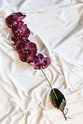 Purple Orchid Silk flower on white background