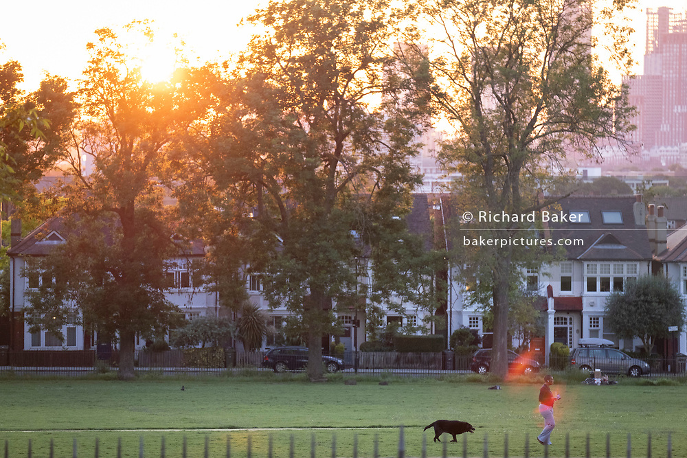 With a setting sun sinking below a line of homes and ash trees, a park-user walks her dog in Ruskin Park, a public green space in Lambeth, south London, on 12th June 2021, in London, Englnd.