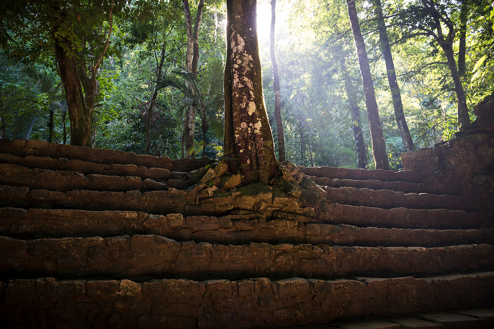 Sunlight streams through the jungle in Palenque, a Mayan city that flourished in the 7th century. The city rose to prominence under the ruler Pakal, who reigned from AD 615 to 683.