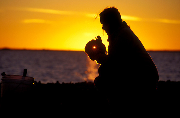 Stock photo of a local resident examining freshly collected oysters at sunrise