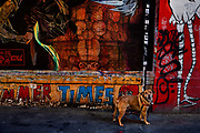 Dog stands at entrance to Clarion Alley, an alleyway in the Mission district in San Francisco, dedicated to a variety of street art rich in colour and images