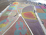 BEIJING, CHINA - DECEMBER 29: <br /> <br /> Aerial View Sea Of Flowers In Beijing<br /> <br /> Aerial view of colorful flowers covering a valley at a scenic attraction of Mi Yun District on December 29, 2016 in Beijing, China. Local working staff form the shape of maps of China and five-star red flags with small windmills, turing the valley into a sea of flowers. <br /> ©Exclusivepix Media