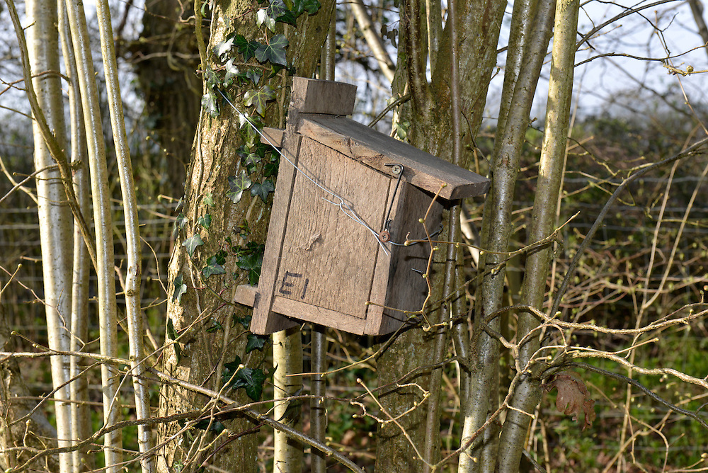 Nest box for Hazel Dormouse - Muscardinus avellanarius
