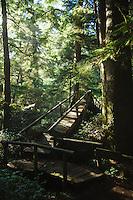 Shi Shi Beach trail in Olympic National Park, WA