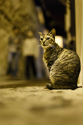 Cat on street at night, Essaouira, Morocco.