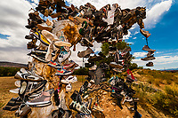 A tree covered in running shoes along the road near Rockville, Utah, USA