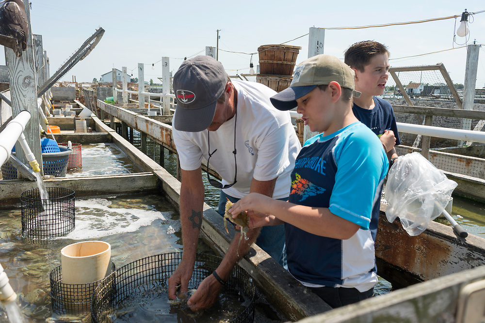 """August 4, 2017 - Tangier Island, VA - Tangier Island Mayor James """"Ooker"""" Eskridge shows a young friend how to detect when the crabs are molting their shells to become soft shell crabs, which are shipped daily to restaurants up and down the Eastern seaboard.  The crab porcessing area is behind his crab shanty. Set on pilings hundreds of yards from shore, the little shacks, where watermen monitor crabs as they shed their hard shells to become soft-shells, are like Tangier itself: islands apart. Perched 12 miles from the Eastern Shore of Virginia, Tangier (about three miles long and 1 1/2 miles wide) is accessible only by boat or by plane; most visitors take the ferry. Boats outnumber cars, and almost everyone makes a living from the water.Photo by Susana Raab/Institute"""