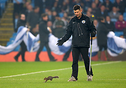 A member of the ground staff tries to remove a Squirrel from the pitch
