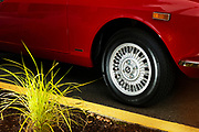 Image of a red Alfa Romeo on a road in Redmond, Washington, Pacific Northwest by Randy Wells