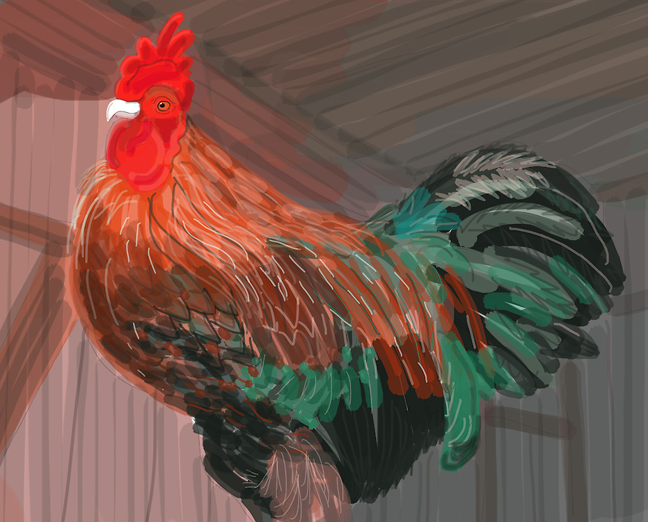 Vermont Rooster in Barn