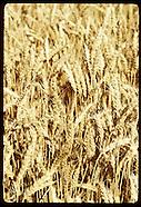03: NAVAJO FARM CROPS, IRRIGATION