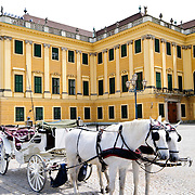 Horses and cart at Schonbrunn Palace, Vienna