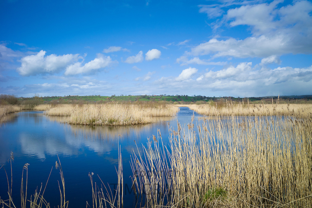Puffy clouds as reflection in the water, reedbed and marshes in The Somerset Levels Nature Reserve in Southern England, UK