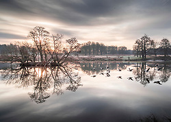© Licensed to London News Pictures. 18/01/2019. London, UK. Geese skim over Pen Ponds in Richmond Park at first light as freezing temperatures and snow hit parts of the UK. Photo credit: Peter Macdiarmid/LNP