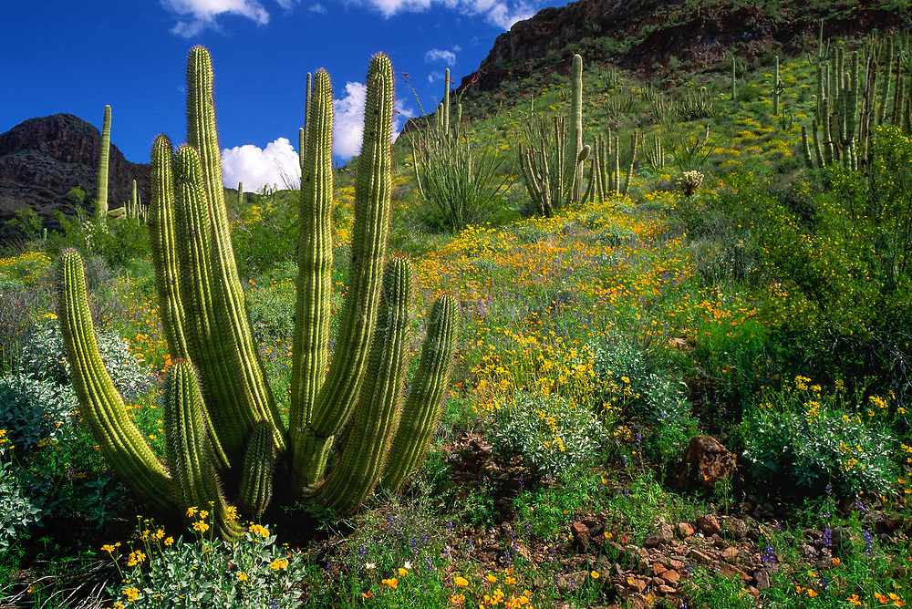 Organ Pipe Cactus National Monument is a U.S. National Monument and UNESCO biosphere reserve located in extreme southern Arizona