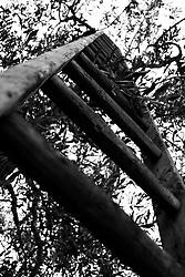 18/11/2010 Acquaviva delle Fonti, scala in legno....La raccolta delle olive e la produzione dell'olio extravergine sono un rituale che si protrae da moltissimo tempo in Puglia, questo avviene solitamente nel periodo che va da novembre a dicembre, mentre il lavoro di preparazione e coltivazione si svolge lungo tutto l'arco dell'anno..La raccolta è seguita nella maggior parte dei casi, quando le olive non vengono vendute all'ingrosso, dalla molitura presso gli oleifici per la produzione di quello che da queste parti viene chiamato anche oro verde..