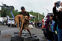 Hunterville, New Zealand -October 27, 2018 - A shepherd carries his dog as he runs through tyres during the annual Shemozzle obstacle race that sees the canines and shepherds tackkle mudslides, ride in wheel barrows and carry bulls testicles. The annual Shemozzle race draws thousands every year to this town of less than 500 people on New Zealand's North Island. Picture: Giordano Stolley