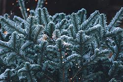 THEMENBILD - Lichterketten auf einem Christbaum mit Neuschnee, aufgenommen am 03. Dezember 2020, Kaprun, Österreich // Fairy lights on a Christmas tree with fresh snow on 2020/12/03, Kaprun, Austria. EXPA Pictures © 2020, PhotoCredit: EXPA/ Stefanie Oberhauser