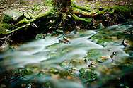 A woodland stream runs towards Pleasant Lake. New London, NH