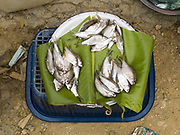 Small fish caught from the Nam Pa river for sale in Pak Nam Noi Market, Phongsaly Province, Lao PDR.