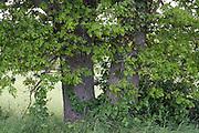 tree trunk next to a grassland field