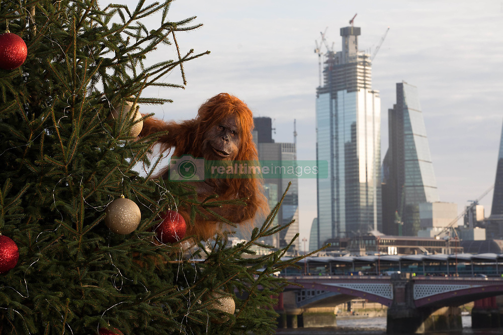 EDITORIAL USE ONLY An ultra-realistic animatronic orangutan climbs a 20ft Christmas Tree at Coin Street Observation Point, London to highlight the threat to the survival of the species due to deforestation caused by palm-oil production, following Iceland's Christmas advert being banned.