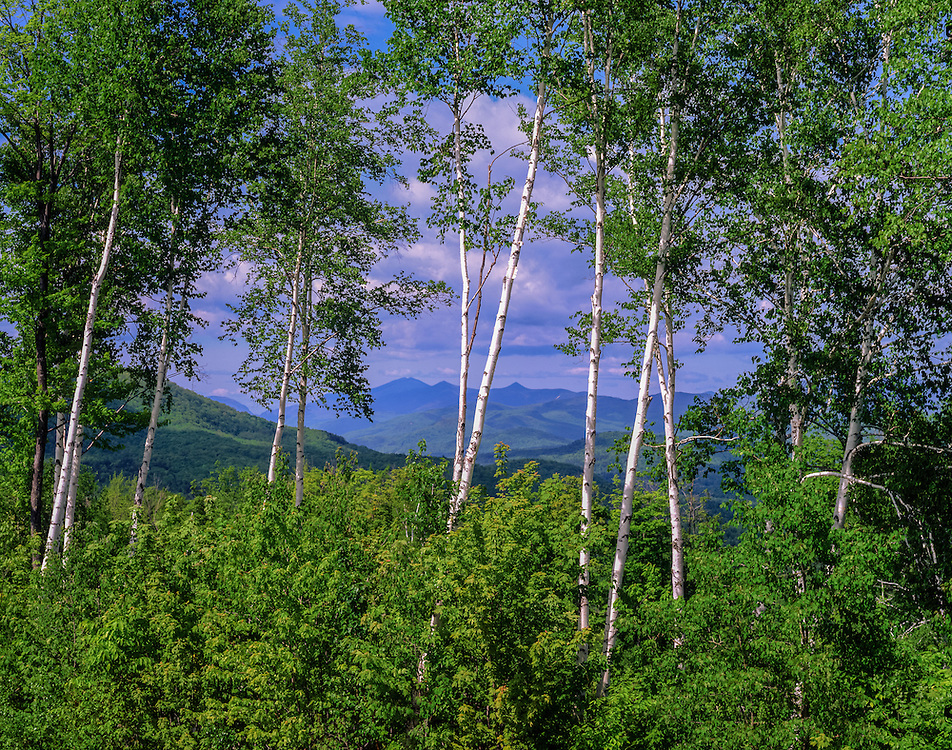 White Mountain Views, framed by Birch Trees in spring, Campton, NH