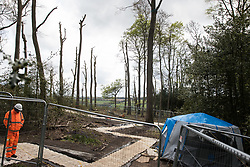 Wendover, UK. 9th May, 2021. A view of a section of ancient woodland at Jones Hill Wood which is being felled for the HS2 high-speed rail link. Felling of Jones Hill Wood, which contains resting places and/or breeding sites for pipistrelle, barbastelle, noctule, brown long-eared and natterer's bats and is said to have inspired Roald Dahl's Fantastic Mr Fox, resumed after a High Court judge lifted an injunction preventing further felling and refused an application for judicial review.
