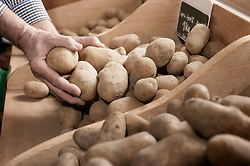 Cropped image of a farmer taking potatoes in the farm, Bavaria, Germany