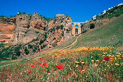 Europe, Spain, Andalusia, Ronda, wildflowers in field in Rio Guadalevin Gorge below city and historic Tajo Bridge,  and Tajo Bridge