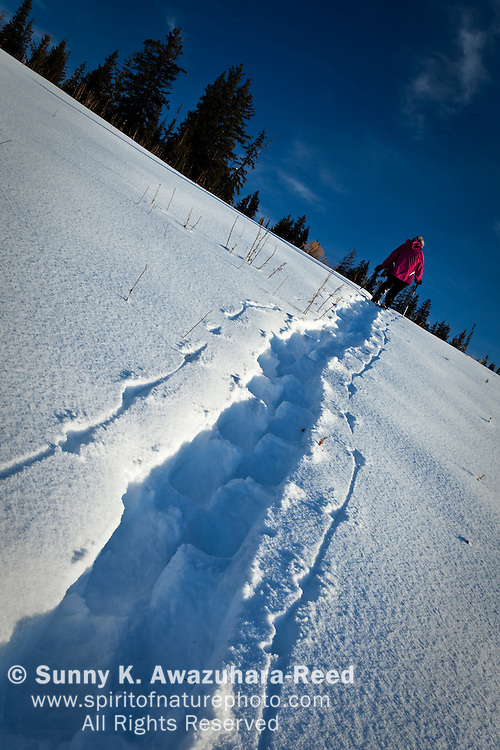 A woman snowshoeing in Togwotee Pass, Bridger Teton National Forest, Wyoming on a sunny day.
