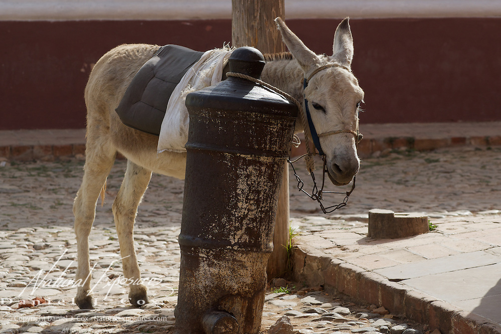 Donkey tied to an inverted canon, Trinidad, Cuba.
