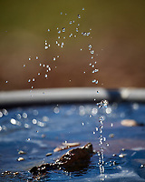 Water Droplets. Image taken with a Nikon D5 camera and 600 mm f/4 VR lens