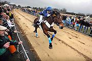 Nederland, Sambeek, 23-2-2009Bij Boxmeer, tussen Sambeek en Vortum Mullum, wordt voor de 269e de Metworstren gehouden. Deze paardenrace voor vrijgezelle ruiters uit Boxmeer vindt altijd plaats op carnavalsmaandag. Steeds rijden drie paarden een race van 750 m. op de met zand bedekte weg. De winnaar van de finale, de koningsrit, levert de koningsruiter eeuwige roem op. Winnaar werd Kevin Kneuman. In 1740 sloeg de koets van een adelvrouw hier op hol, waarna toevallig op het land rijdende, ongehuwde ruiters voor haar redding zorgden. Als beloning kregen deze een grote metworst, twee broden, twee vaten bier en een halve varkenskop. Folklore, traditie, karnaval, paardenrensport.Foto: Flip Franssen/Hollandse Hoogte