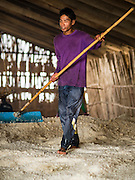 10 FEBRUARY 2016 - BAN LAEM, PHETCHABURI, THAILAND: A worker rakes harvested salt in a salt barn at the beginning of the salt harvest in Phetchaburi province, Thailand. The salt harvest in Thailand usually starts in February and continues through May. Salt is harvested in many of the provinces along the coast, but the salt fields in Phetchaburi province are considered the most productive. The salt fields are flooded with sea water, which evaporates off leaving salt behind. Salt production relies on dry weather and producers are hoping the current drought will mean a longer harvest season for them.      PHOTO BY JACK KURTZ