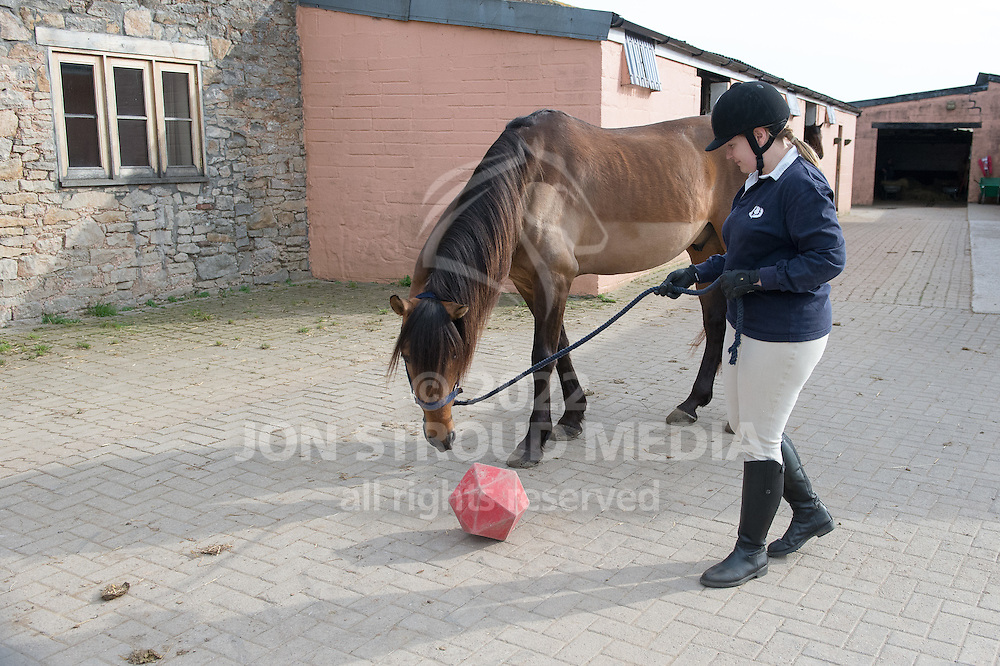 A horse playing with a treat ball - Urchinwood Manor, Congresbury, Bristol, North Somerset, United Kingdom - 01 April 2014