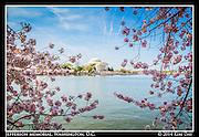 Jefferson Memorial Amid The Cherry Blossoms<br /> Washington, DC<br /> April 13, 2014