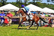 April 7, 2012 - Royale and Willie McCarthy at Stoneybrook Steeplechase, Raeford NC