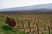 home made wheel barrow to burn branches vineyard dezize les maranges santenay cote de beaune burgundy france