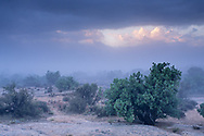 Ground fog and storm clouds over Juniper trees, Arches National Park, Utah