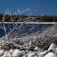 North America, Canada, Nova Scotia, Guysborough County. Driftwood on Rocks at Black Duck Cove Day Use Park.