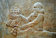 Stone relief sculptured panel of Horse Driver. Facade L. Inv AO 19883 from Dur Sharrukin the palace of Assyrian king Sargon II at Khorsabad, 713-706 BC.  Louvre Museum Room 4 , Paris .<br /> <br /> If you prefer to buy from our ALAMY PHOTO LIBRARY  Collection visit : https://www.alamy.com/portfolio/paul-williams-funkystock/ancient-assyria-antiquities.html  Refine search by adding background colour, place, subject, museum etc into the LOWER SEARCH WITHIN GALLERY box to <br /> <br /> Visit our ANCIENT WORLD PHOTO COLLECTIONS for more photos to download or buy as wall art prints https://funkystock.photoshelter.com/gallery-collection/Ancient-World-Art-Antiquities-Historic-Sites-Pictures-Images-of/C00006u26yqSkDOM
