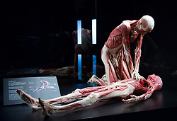 October 4, 2018 - London, London, United Kingdom - Two human bodies showed in the exhibition. Launch of Gunther von Hagens' Body Worlds museum which is opening at a permanent museum site at The London Pavilion. (Credit Image: © Gustavo Valiente/i-Images via ZUMA Press)