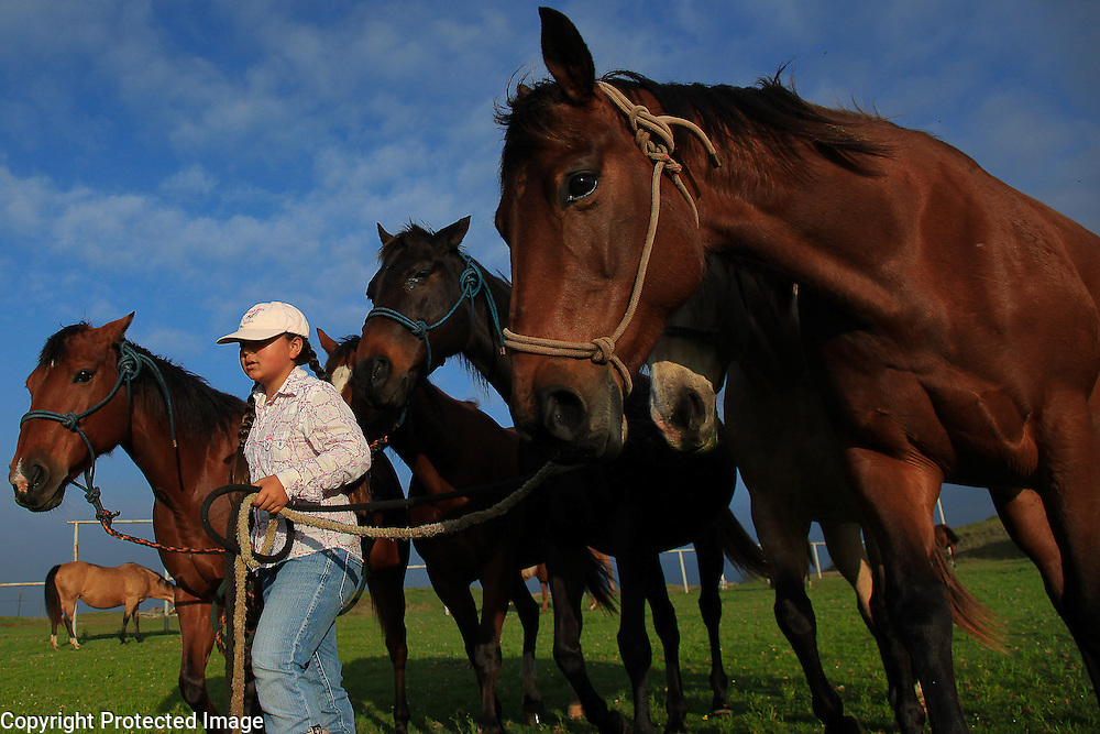 Ikena Nakoa, 10, leads a group of horses to another pasture after feeding them hay for breakfast at Dahana Ranch in Wimea, Hawaii. Her father, Harry Nakoa, breeds and trains horses for use in rodeos and on ranches.  Ikena and her two siblings have grown up helping him and are an intregral party of the family-run operation.