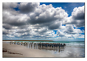 Flock of king penguins gathering on the beach of Volunteer Point, East Falkland Island. Nikon D850, 24-70mm @ 31mm, f18, EV+0.33, 1/200sec, ISO160, Aperture priority, Tone mapping