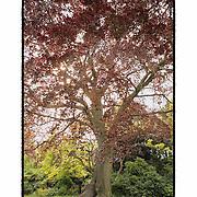 Regents Park Red Tree- London, UK - Artist Designed Custom Border